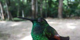 Nahá y Metzabok alberga especies en peligro de extinción tales como el Águila Arpía, Jaguar, Hocofaisán y Quetzal. Cortesía: zoommx