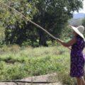 Guamúchil, la fruta silvestre que sostiene a muchas familias. Foto: Amapola