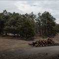 """""""Mucha teoría, poca práctica"""": audiencia expone deficiencias del combate contra tala ilegal"""
