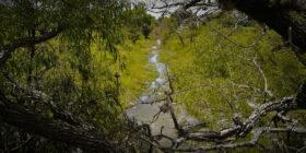 El río Laja: matar un río saqueando su arena
